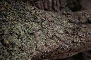 Imitace kůry stromu ze stříkaného betonu v ZOO Liberec - Bamboodesign