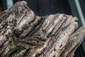 Detail umělého stromu z betonu v ZOO Liberec - Bamboodesign