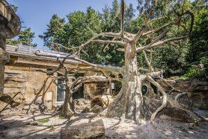 Umělý strom ze stříkaného betonu v ZOO Olomouc - Bamboodesign