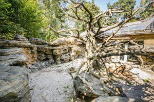 Imitace stromu fíkusu ze stříkaného betonu v ZOO Olomouc - Bamboodesign