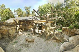 Imitace fíkusu ze stříkaného betonu v ZOO Olomouc - Bamboodesign